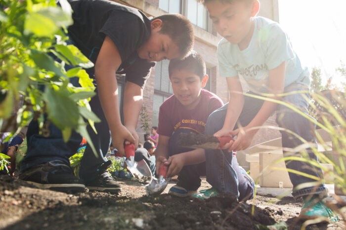 Openlands working with school students to plant native plants in the gardens at Corkery Elementary School