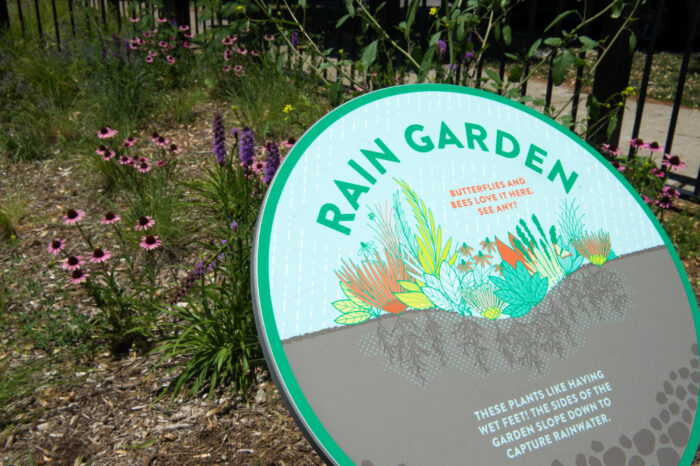 image of rain garden at Orozco Community Academy, Space to Grow