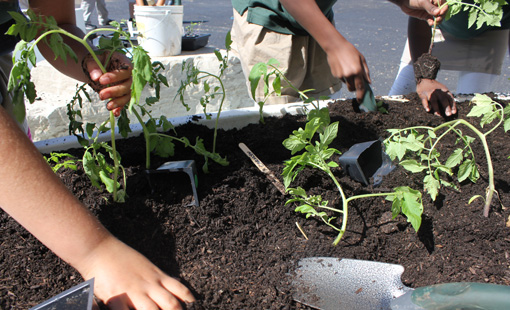 Edible Gardens Sprouting Up Across Chicago Public Schools!