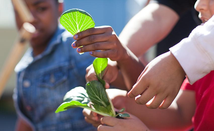 green-schoolyard-blog
