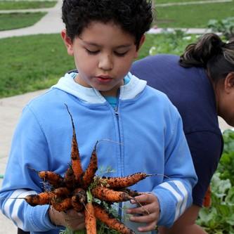 greene-carrots