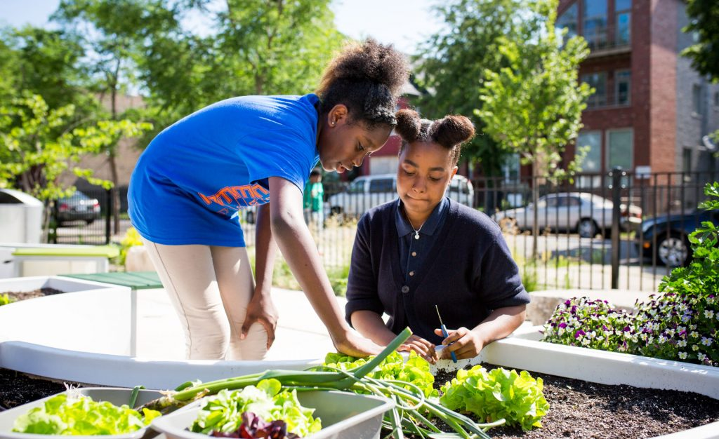 student harvesting school garden Chicago