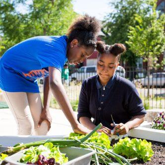 student harvesting school garden Chicago